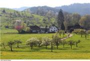 Landhotel Tobererhof - Schwarzwald