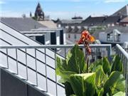 Hilton Mainz City - Rheinland-Pfalz